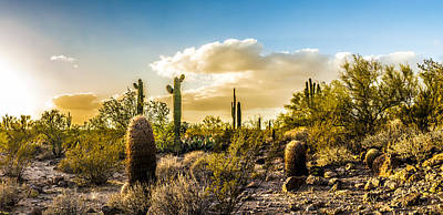 Sonoran Desert Sunset Panoramic Poster by Chuck Brown