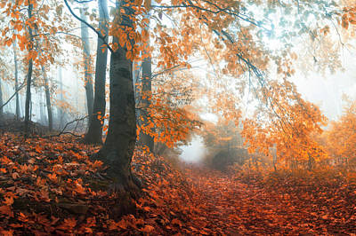 Sound Of Fall Poster by Janek Sedlar
