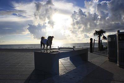 South Beach Dog Walk Poster by Mandy Shupp
