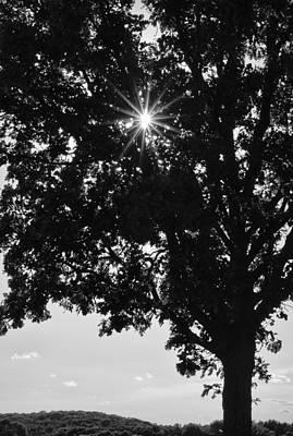 Sparkle Through The Treetops Poster by Christi Kraft