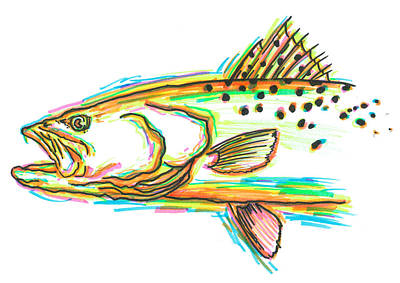 Speckled Sea Trout Poster by David Danforth