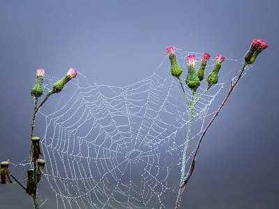 Spider Web Poster by Zina Stromberg