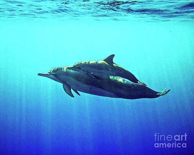 Spinner Dolphin With Baby Poster by Bette Phelan