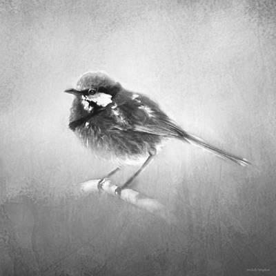Splendid Fairy Wren In Black And White Poster by Michelle Wrighton