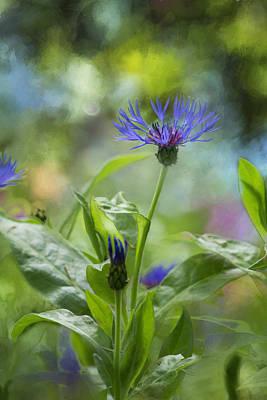 Splendor In The Garden Poster by Belinda Greb