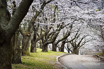 Spring Apple Orchard Poster by Elena Elisseeva