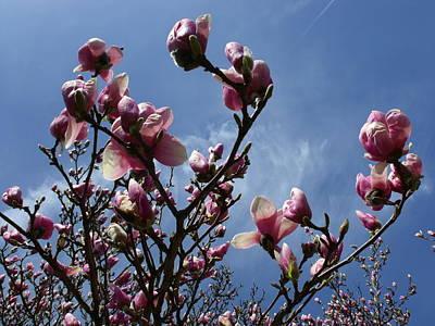 Spring Blooms 2010 Poster by Anna Villarreal Garbis