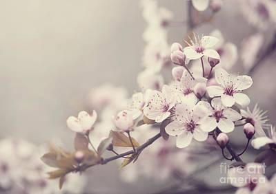 Spring Blossom Poster by Jelena Jovanovic