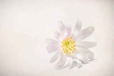 Spring Blossom Poster by Scott Norris