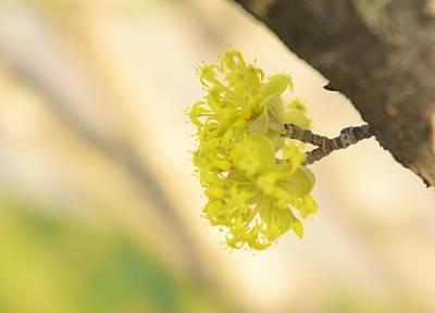Spring Blossom  Poster by Art Spectrum