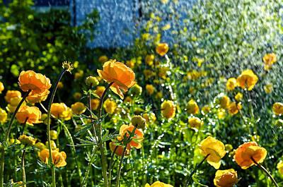 Spring Flowers In The Rain Poster by Tamara Sushko