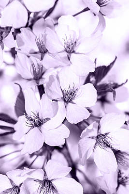 Spring Flowers On Branch Poster by Toppart Sweden
