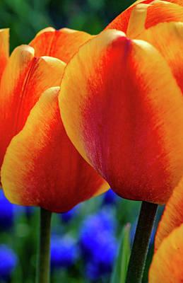 Spring Garden - Act One 4 Poster by Steve Harrington