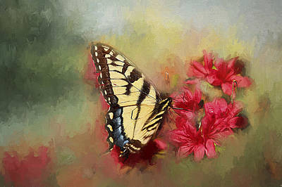 Spring Swallowtail Poster by Darren Fisher