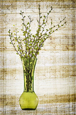 Spring Vase Poster by Elena Elisseeva