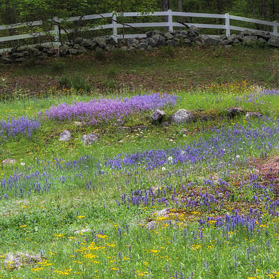 Spring Wildflowers Square Poster by Bill Wakeley