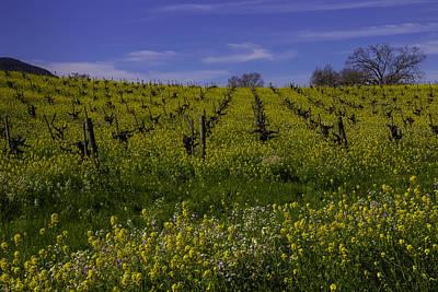 Springtime Vineyards Sonoma Poster by Garry Gay
