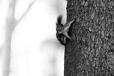 Squirrel Trees Fog Poster by Bob Orsillo