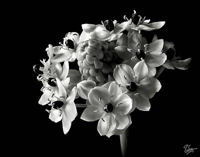 Star Of Bethlehem In Black And White Poster by Endre Balogh