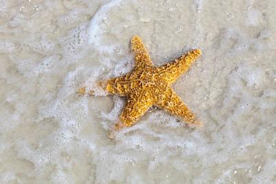Starfish Poster by Janet Fikar