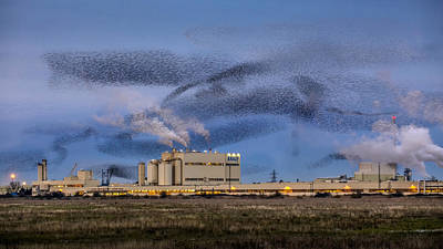 Starling Mumuration Poster by Ian Hufton