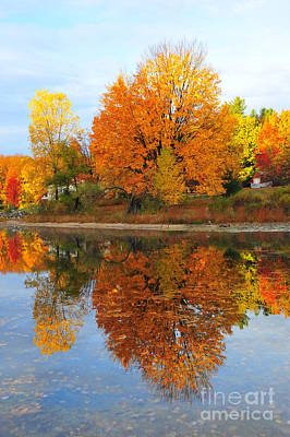 Stoneledge Lake Waterfront Reflection Poster by Terri Gostola