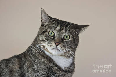 Stroppy Cat Poster by Terri Waters