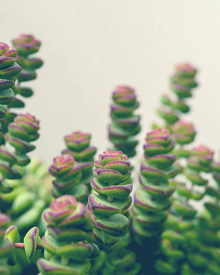 Succulents Poster by Joy StClaire