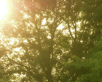Summer Sunrise Through The Trees Poster by Dan Sproul