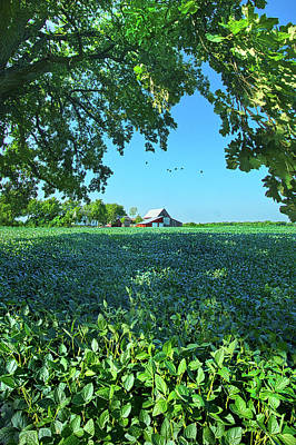 Summertime Blues Poster by Phil Koch