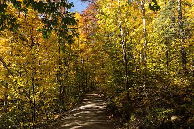 Sun Dappled Autumn Path - Enjoying A Sunny Forest Walk Poster by Georgia Mizuleva