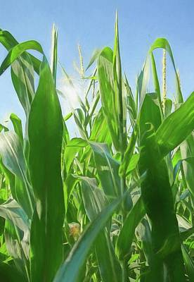 Sun Flare Through Corn Stalks Poster by Dan Sproul