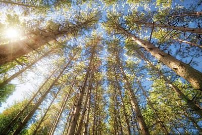 Sun Shining Through Treetops - Retzer Nature Center Poster by Jennifer Rondinelli Reilly