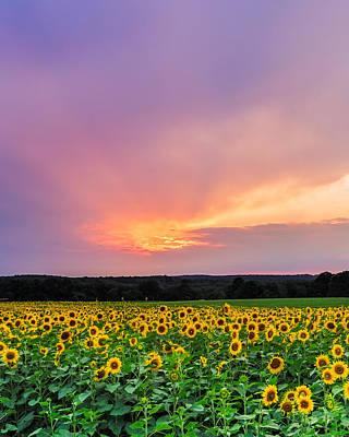 Sunflower Sherbert Poster by Bryan Bzdula