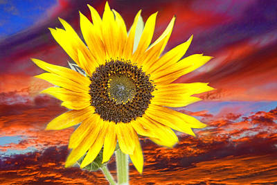 Sunflower Sunset Poster by James BO  Insogna