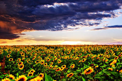 Sunflowers At Sunset Poster by Eric Benjamin