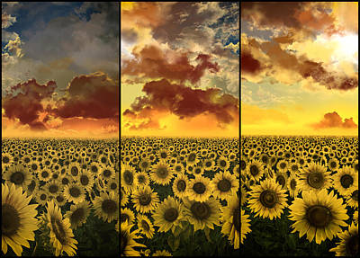 Sunflowers Triptych Poster by Bekim Art