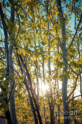 Sunlit Leaves Poster by Lisa Killins