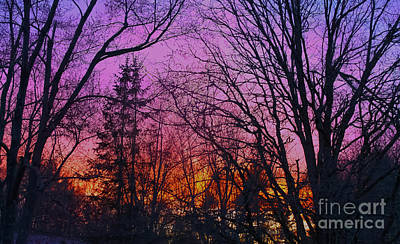 Sunset In The Woods-hdr Poster by Claudia M Photography