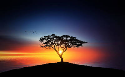 Sunset On The Tree Poster by Bess Hamiti