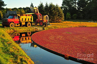 Sunset Over Cranberry Bog Poster by Catherine Reusch  Daley