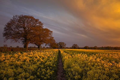 Sunset Over The Rapeseed Field Poster by Chris Fletcher