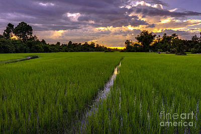 Sunset Rice Fields In Cambodia Poster by Mike Reid