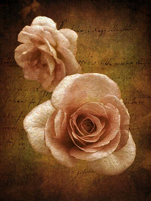 Sunset Rose Poster by Jessica Jenney