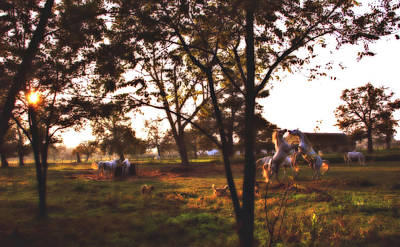 Sunset Stallion Games  Poster by ELA-EquusArt