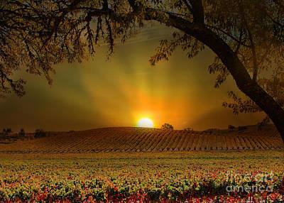 Surise Vineyard Poster by Stephanie Laird