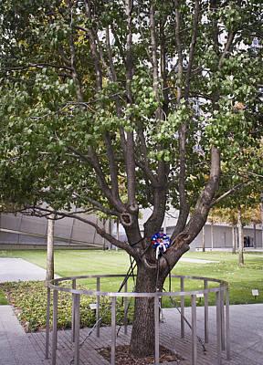 Survivor Tree Poster by Teresa Mucha