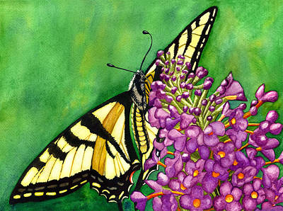 Swallowtail 1 Poster by Catherine G McElroy