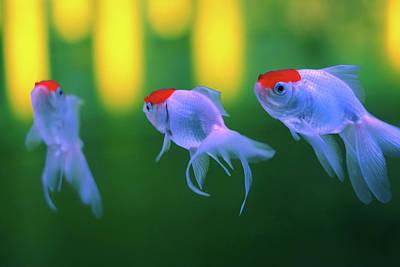 Swimming Fishes Underwater Poster by Yuki Crawford