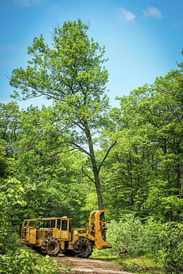Taking One Of My Oak Trees For A Walk Poster by Paul Freidlund